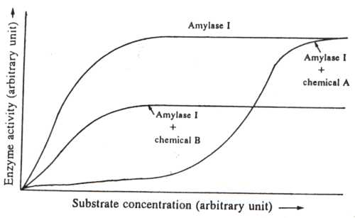 effect of temperature on amylase activity coursework