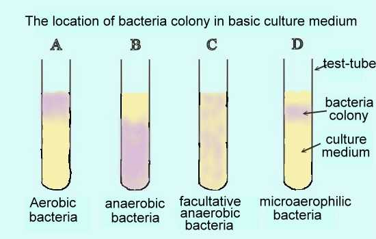 (3) Facultative anaerobic bacteria